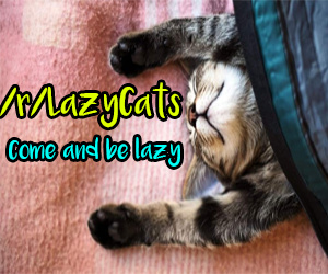 House Ad - r/LazyCats - 9.24